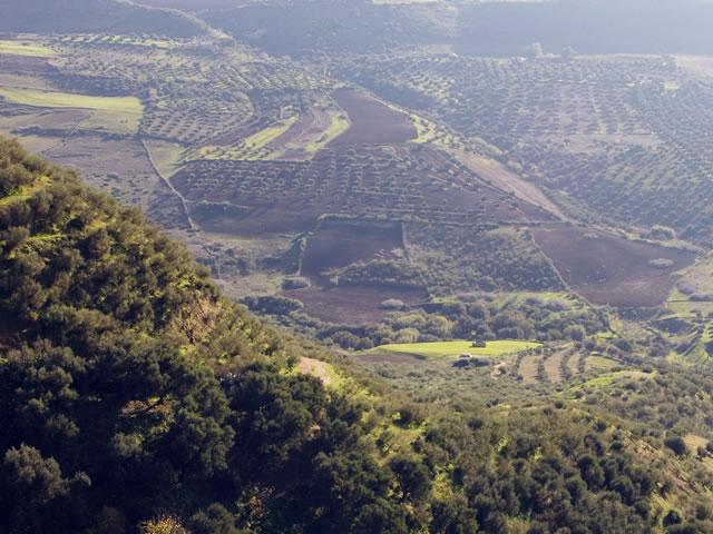 http://www.agropoleolivier.com/wp-content/uploads/2020/05/filiere.jpg